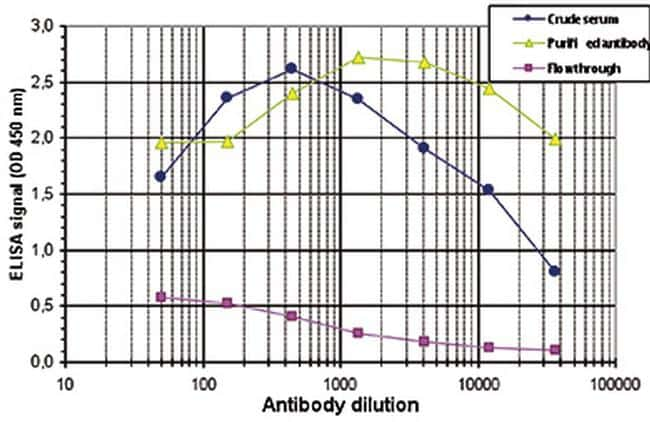 p53 Antibody in ELISA (ELISA)
