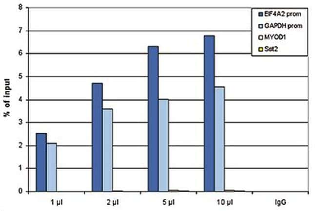 RNA pol II CTD Antibody in ChIP assay (ChIP)