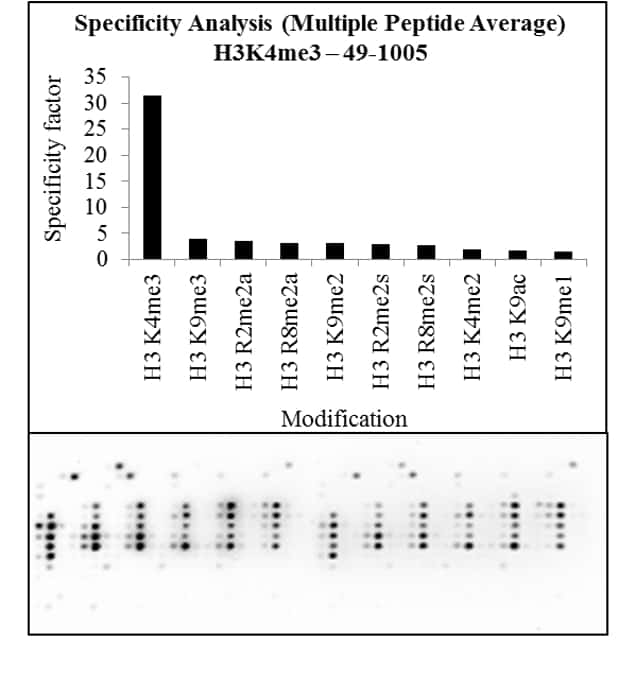 Tri-Methyl-Histone H3 (Lys4) Antibody in Peptide Array (Array)