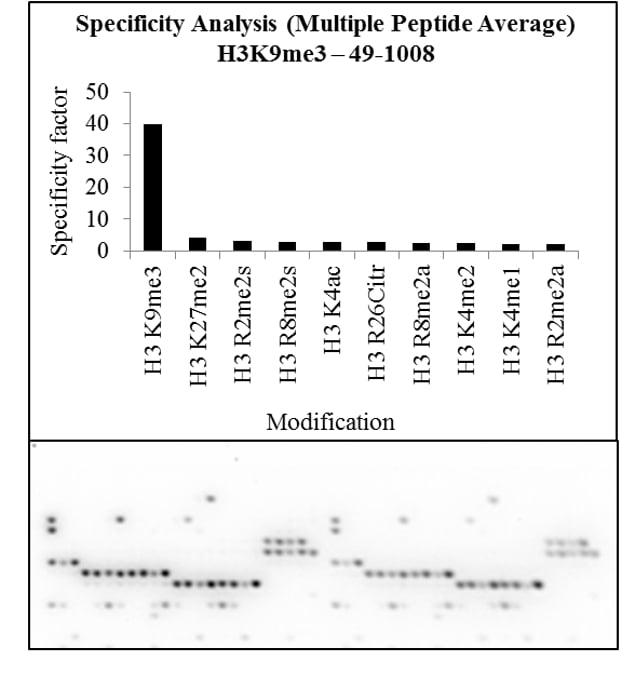 Tri-Methyl-Histone H3 (Lys9) Antibody in Peptide Array (ARRAY)