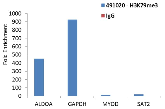 Tri-Methyl-Histone H3 (Lys79) Antibody in ChIP assay (ChIP)