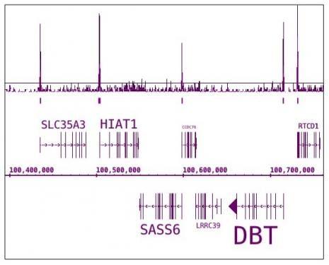 Phospho-RNA pol II CTD (Ser7) Antibody in ChIP-sequencing (ChIP-Seq)