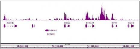 MLL / HRX Antibody in ChIP-sequencing (ChIP-Seq)