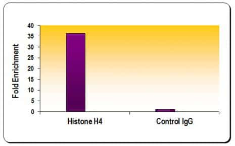 Histone H4 Antibody in ChIP assay (ChIP)