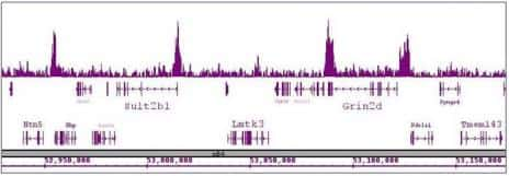 CDK8 Antibody in ChIP-sequencing (ChIP-Seq)