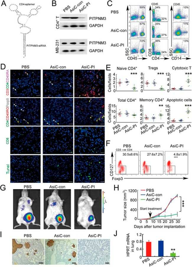 CD4 Antibody, APC (Monoclonal, RPA-T4)