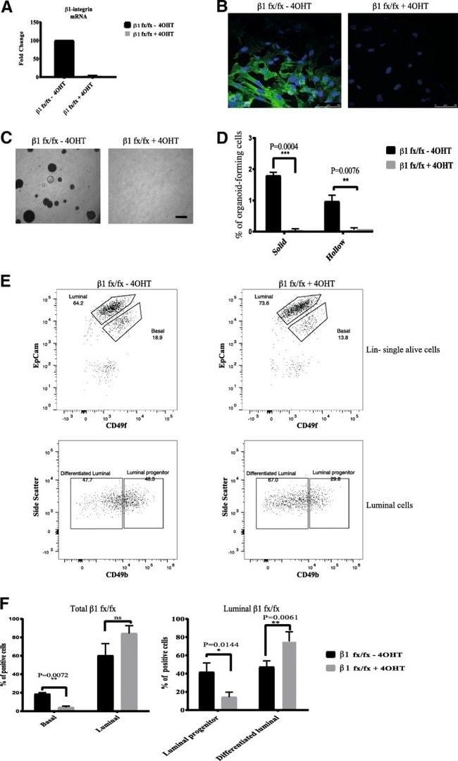 CD29 (Integrin beta 1) Antibody, FITC (Monoclonal, eBioHMb1-1 (HMb1-1))