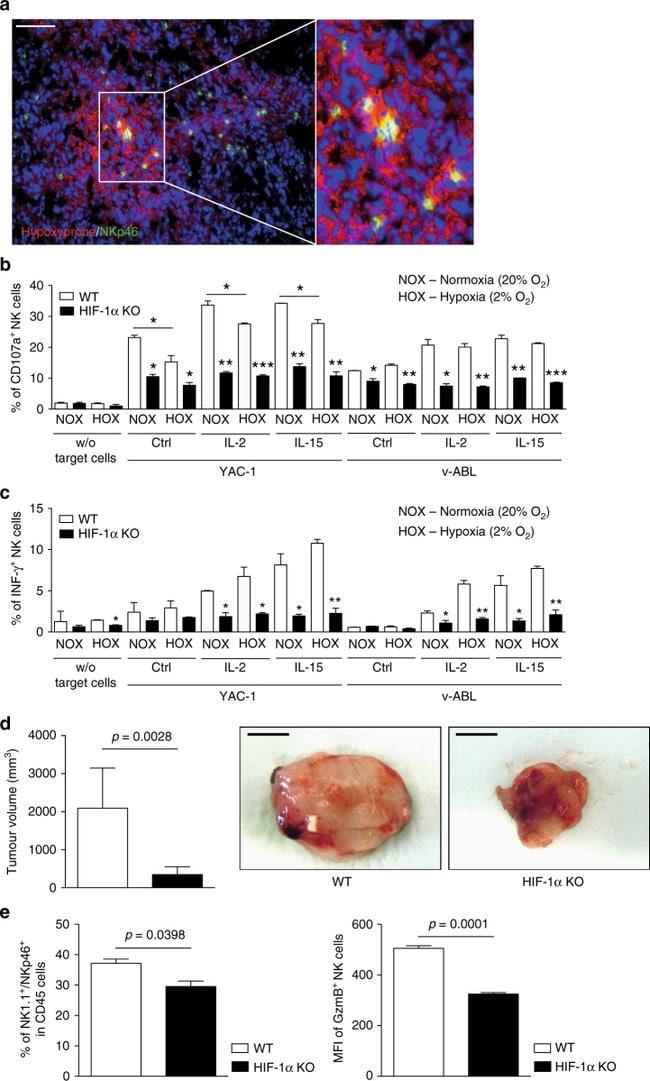 CD335 (NKp46) Antibody, PE (Monoclonal, 29A1 4)