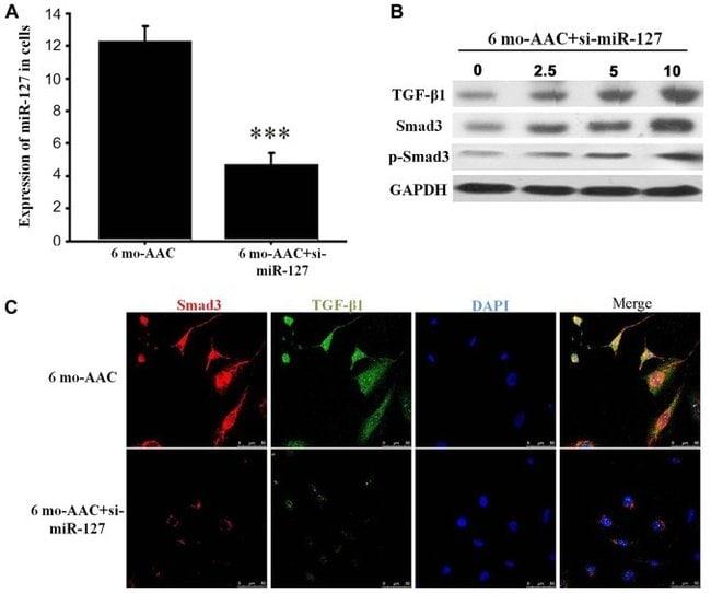 SMAD3 Antibody (51-1500)
