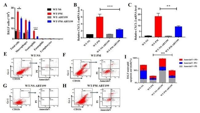 Ly-6G/Ly-6C Antibody (Monoclonal, RB6-8C5)