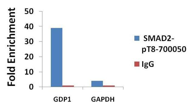 Phospho-SMAD2 (Thr8) Antibody in ChIP assay (ChIP)