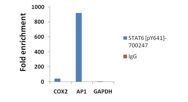 Phospho-STAT6 (Tyr641) Antibody in ChIP assay (ChIP)
