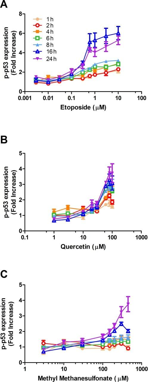 Phospho-p53 (Ser15) Antibody