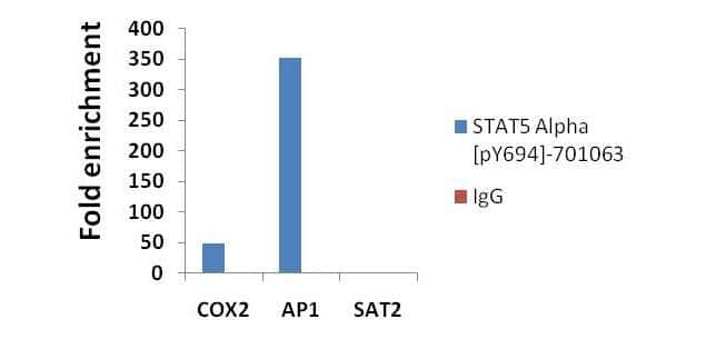 Phospho-STAT5 alpha (Tyr694) Antibody in ChIP assay (ChIP)