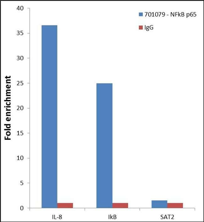NFkB p65 Antibody in Relative expression