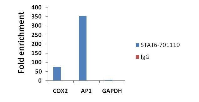 STAT6 Antibody in ChIP assay (ChIP)