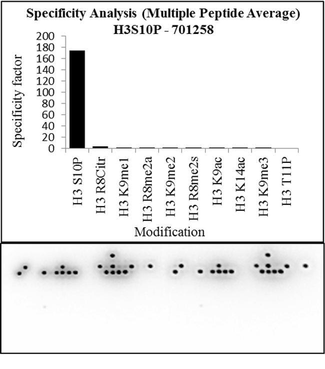Phospho-Histone H3 (Ser10) Antibody in Peptide Array (ARRAY)