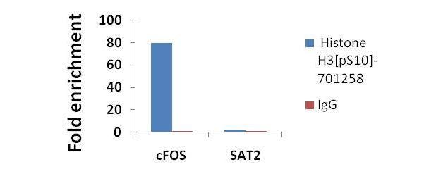 Phospho-Histone H3 (Ser10) Antibody in ChIP assay (ChIP)