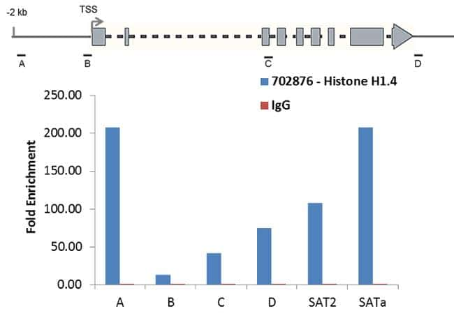 Histone H1.4 Antibody in ChIP assay (ChIP)