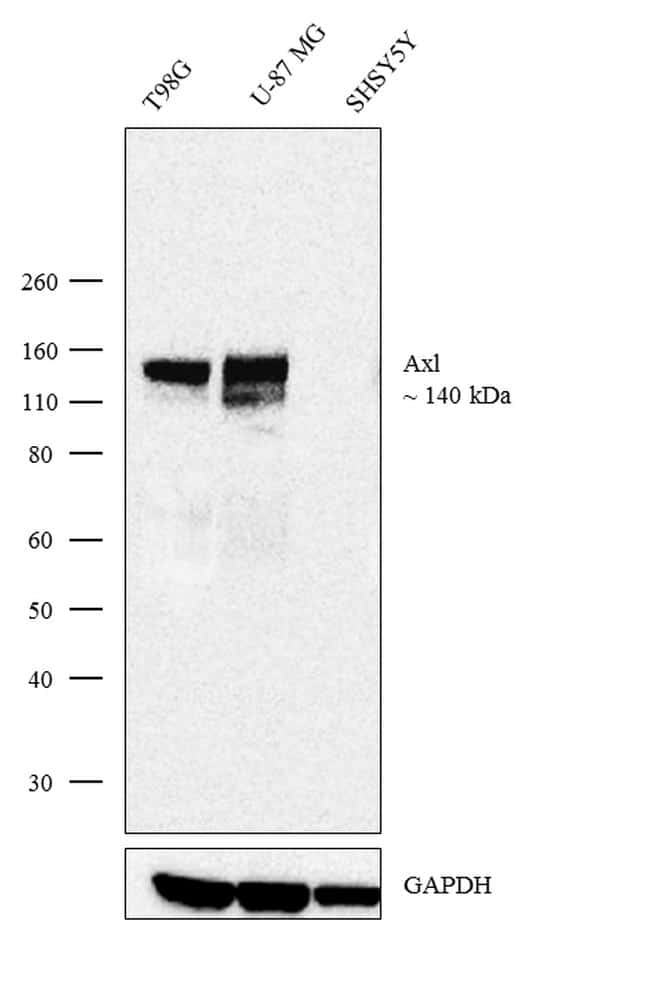 Axl Antibody in Relative expression