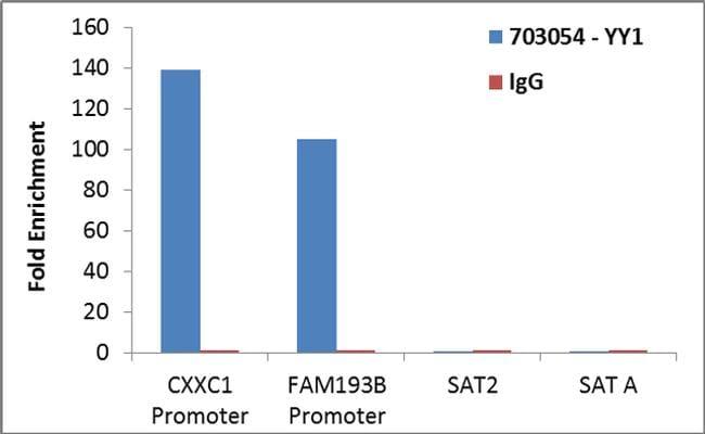 YY1 Antibody in ChIP assay (ChIP)