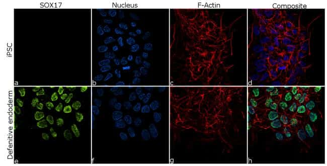 SOX17 Antibody in Relative expression