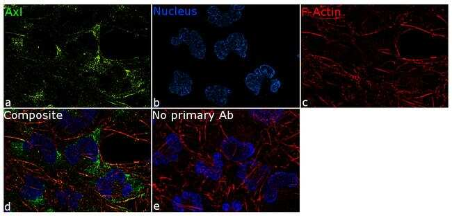 Axl Antibody in Immunofluorescence (IF)