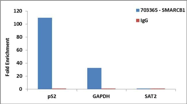 SMARCB1 Antibody in Relative expression