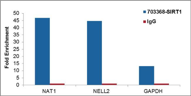 SIRT1 Antibody in ChIP assay (ChIP)