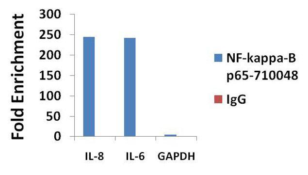 NFkB p65 Antibody in ChIP assay (ChIP)