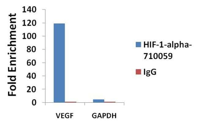 HIF1A Antibody in Relative expression