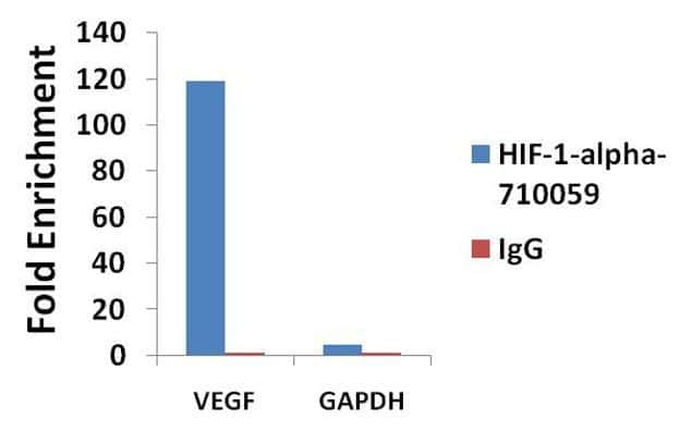HIF1A Antibody in ChIP assay (ChIP)
