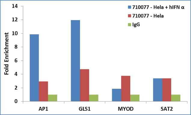 STAT3 Antibody in ChIP assay (ChIP)
