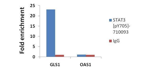 Phospho-STAT3 (Tyr705) Antibody in ChIP assay (ChIP)