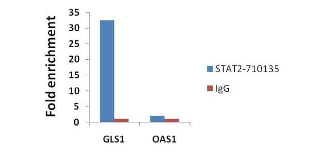 STAT2 Antibody in Relative expression