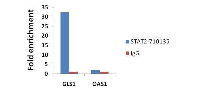 STAT2 Antibody in ChIP assay (ChIP)