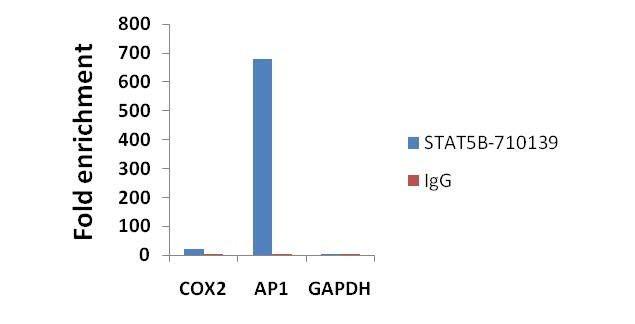 STAT5 beta Antibody in ChIP assay (ChIP)