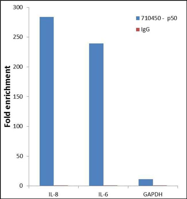 NFkB p50 Antibody in Relative expression