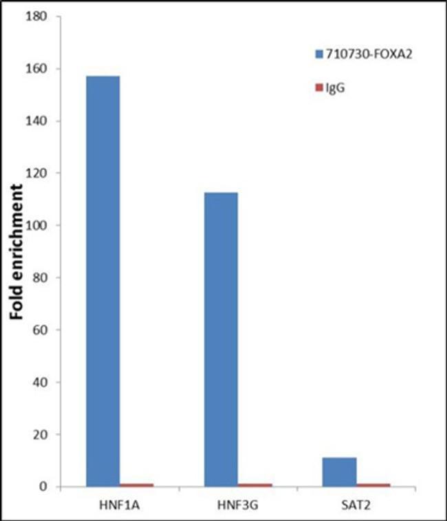 FOXA2 Antibody in Relative expression