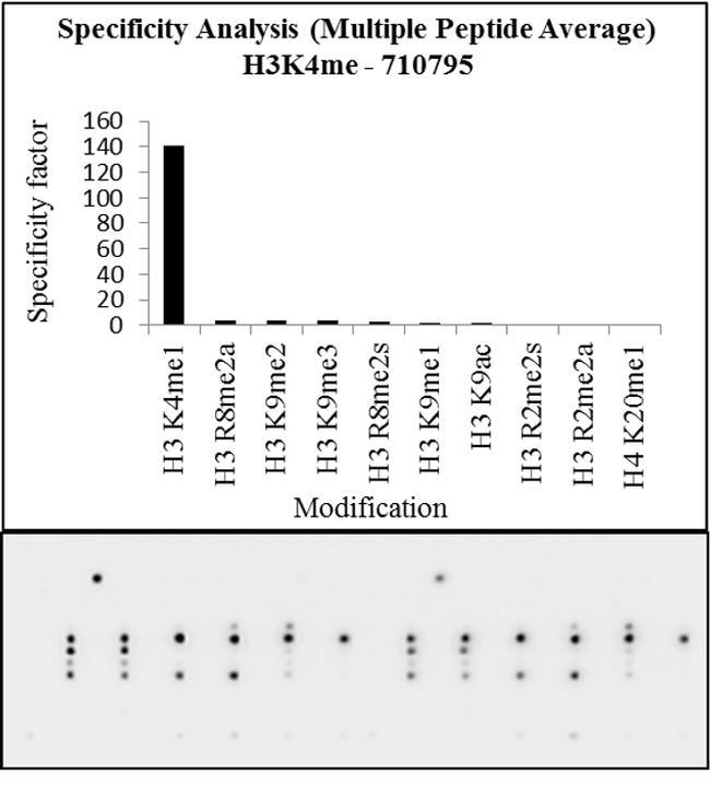 H3K4me1 Antibody in Peptide array