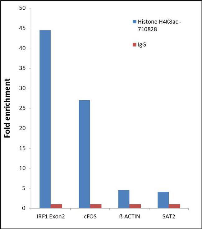 H4K8ac Antibody in Relative expression
