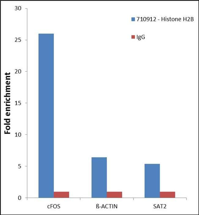 Histone H2B Antibody in Relative expression