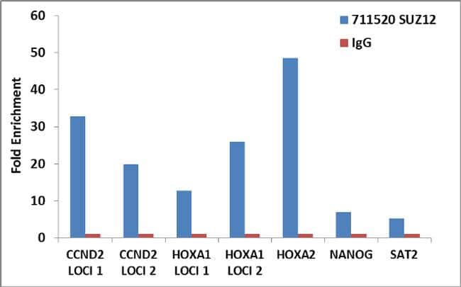 SUZ12 Antibody in ChIP assay (ChIP)