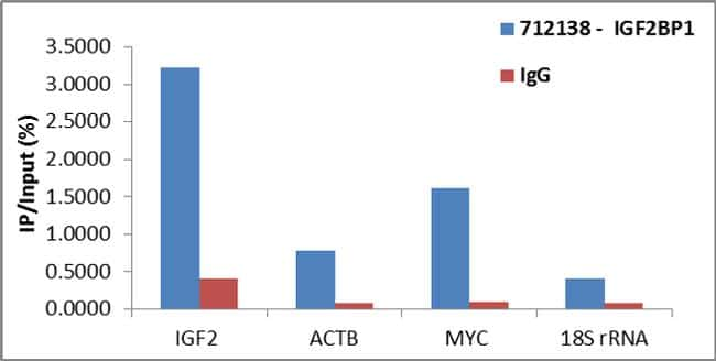 IGF2BP1 Antibody in RNA Immunoprecipitation (RIP)