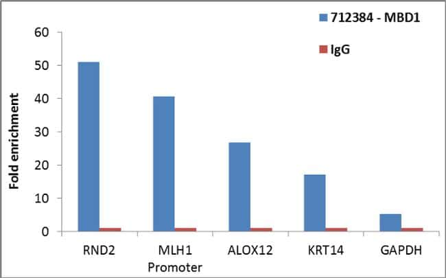 MBD1 Antibody in ChIP assay (ChIP)