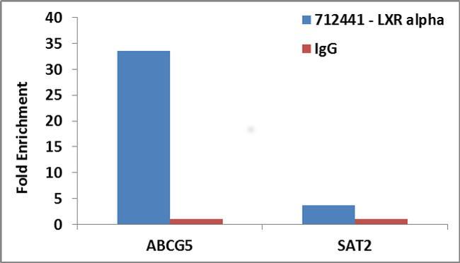 LXR alpha Antibody in ChIP assay (ChIP)
