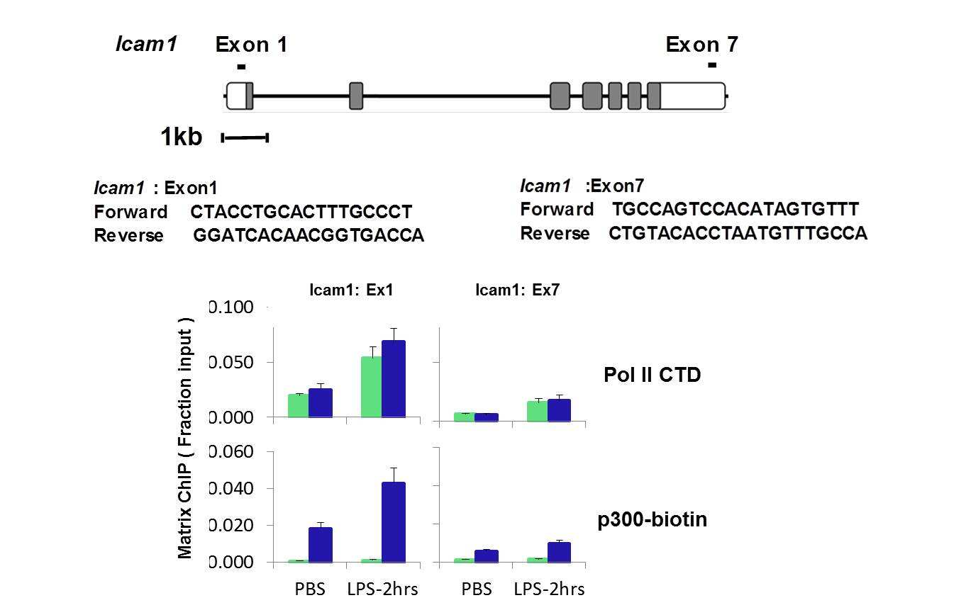 p300 Antibody in Relative expression (RE)
