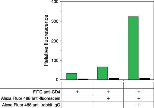 Rabbit IgG (H+L) Cross-Adsorbed Secondary Antibody