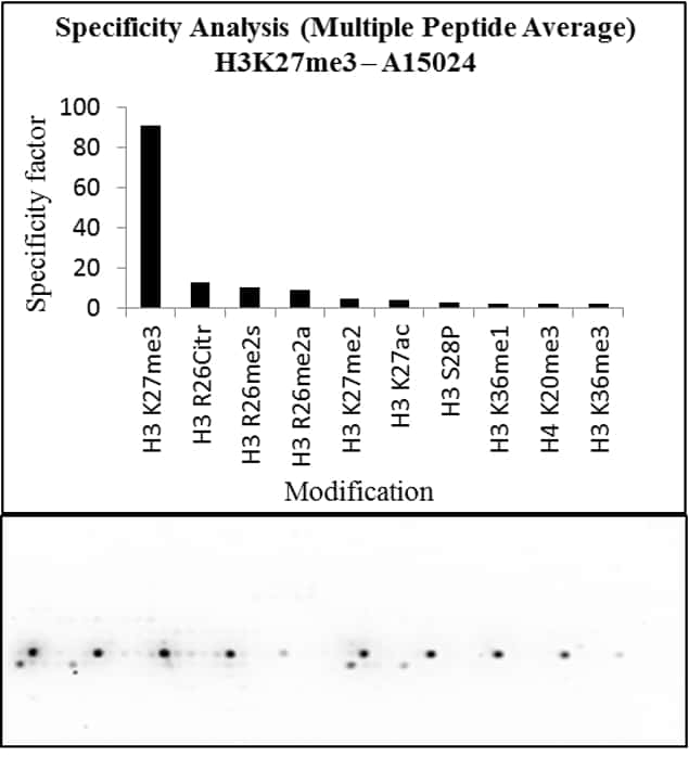 Tri-Methyl-Histone H3 (Lys27) Antibody in Peptide Array (Array)