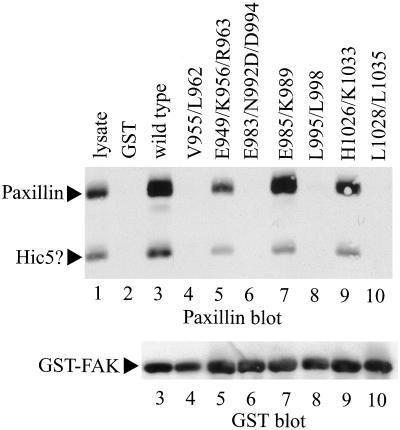 GST Tag Antibody